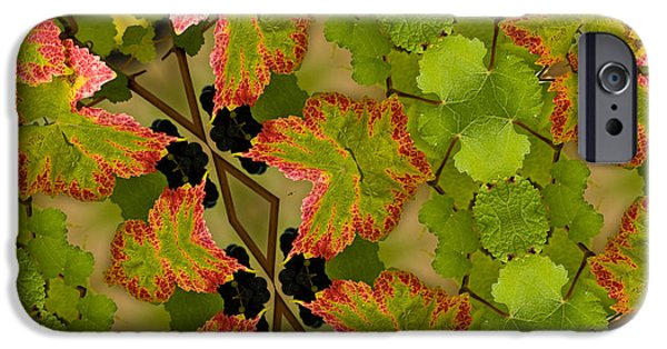 Creative Manipulation iPhone Cases - Vineyard quilt iPhone Case by Jean Noren