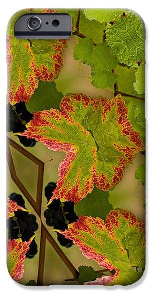Vineyard quilt iPhone Case by Jean Noren