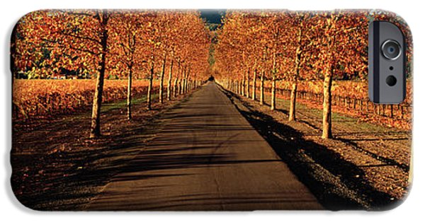 Vineyard In Napa iPhone Cases - Vineyards Along A Road, Beaulieu iPhone Case by Panoramic Images