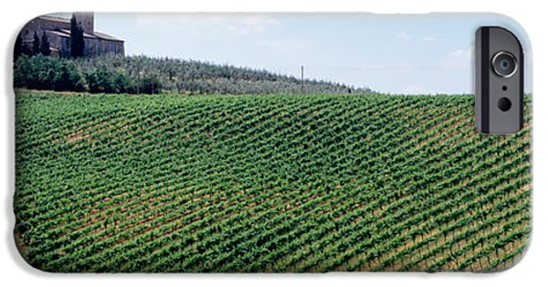 Winery Photography iPhone Cases - Vineyards And Olive Grove Outside San iPhone Case by Panoramic Images