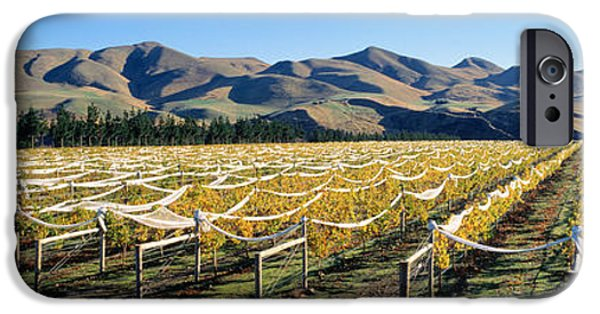 Winery Photography iPhone Cases - Vineyards N Canterbury New Zealand iPhone Case by Panoramic Images