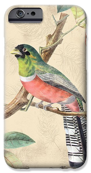 Nature Study iPhone Cases - Vintage Bird Study-A iPhone Case by Jean Plout