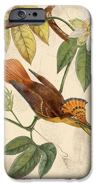 Nature Study Digital Art iPhone Cases - Vintage Bird Study-C iPhone Case by Jean Plout