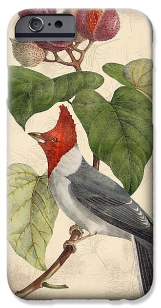 Nature Study Digital Art iPhone Cases - Vintage Bird Study-D iPhone Case by Jean Plout