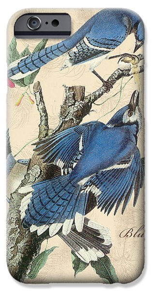 Nature Study Digital Art iPhone Cases - Vintage Bird Study-F iPhone Case by Jean Plout