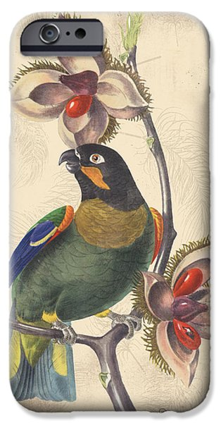 Nature Study Digital Art iPhone Cases - Vintage Bird Study-G iPhone Case by Jean Plout