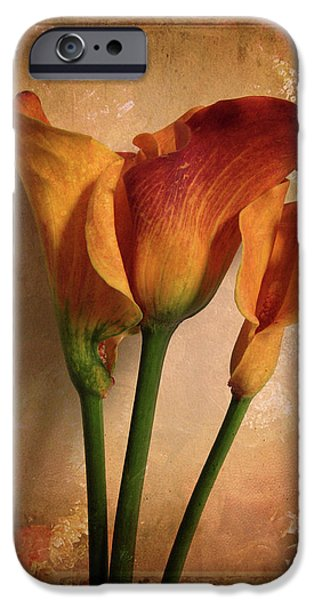 Flower Still Life iPhone Cases - Vintage Calla Lily iPhone Case by Jessica Jenney