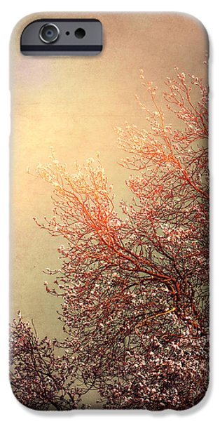 Vintage Cherry Blossom iPhone Case by Wim Lanclus