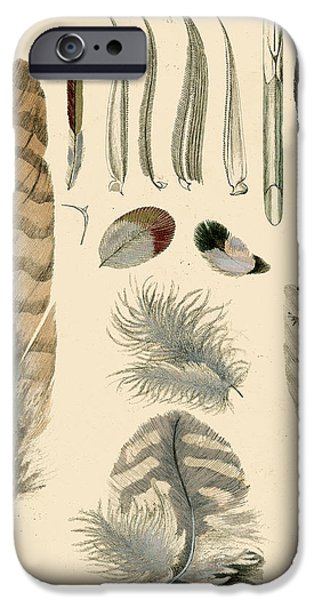 Hawk Art Print iPhone Cases - Vintage Feather Study-A iPhone Case by Jean Plout