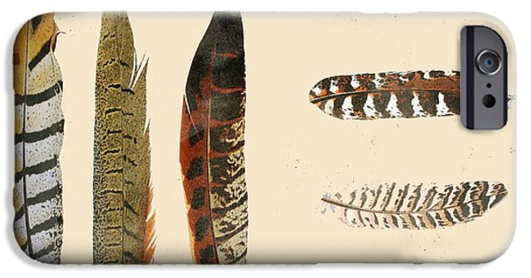 Nature Study iPhone Cases - Vintage Feather Study-F iPhone Case by Jean Plout