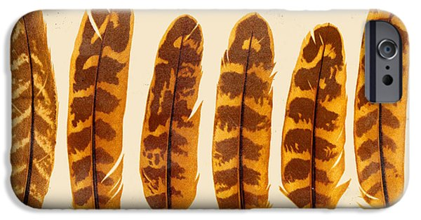 Nature Study iPhone Cases - Vintage Feather Study-G iPhone Case by Jean Plout