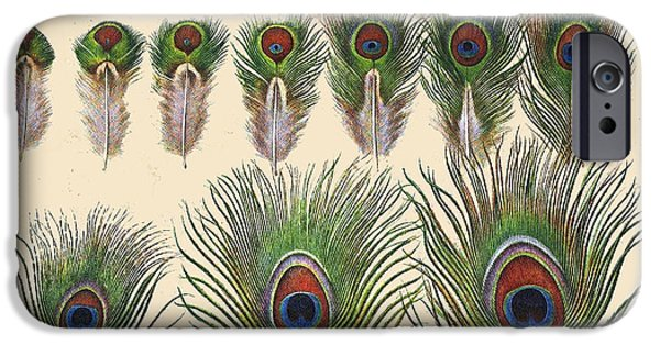 Hawk Art Print iPhone Cases - Vintage Feather Study-H iPhone Case by Jean Plout