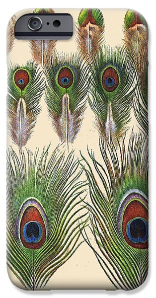 Hawk Art Print iPhone Cases - Vintage Feather Study-JP2084 iPhone Case by Jean Plout