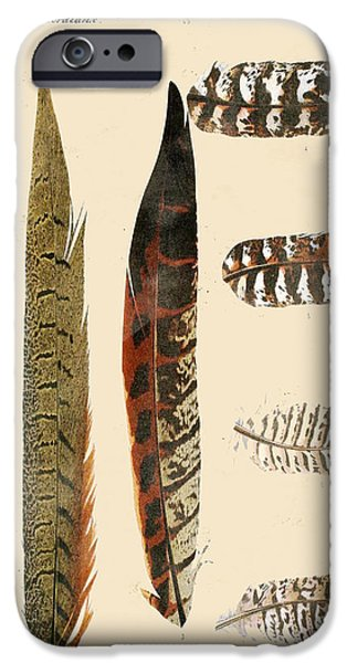 Hawk Art Print iPhone Cases - Vintage Feather Study-JP2085 iPhone Case by Jean Plout