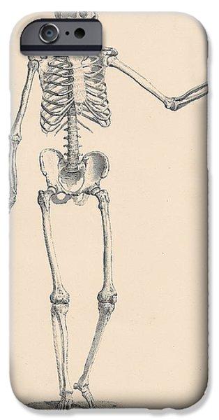 Biological Digital Art iPhone Cases - Vintage Skeleton iPhone Case by Nomad Art And  Design