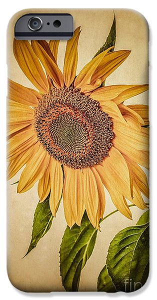 Flora iPhone Cases - Vintage Sunflower iPhone Case by Edward Fielding