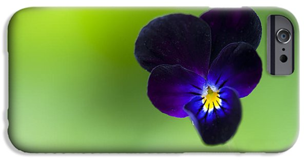 Pansy iPhone Cases - Viola cornuta Bowles Black iPhone Case by Tim Gainey
