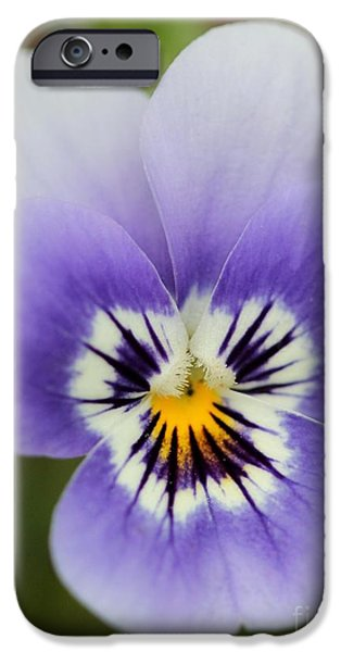 Viola named Sorbet Marina Baby Face iPhone Case by J McCombie