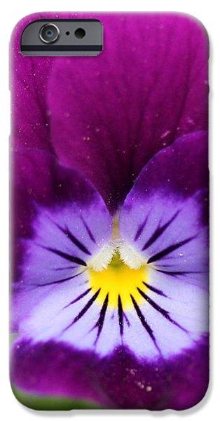 Viola named Sorbet Plum Velvet Jump-Up iPhone Case by J McCombie