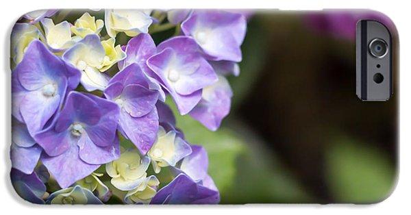 Botanic Illustration iPhone Cases - Violet flower iPhone Case by Salvatore Pappalardo