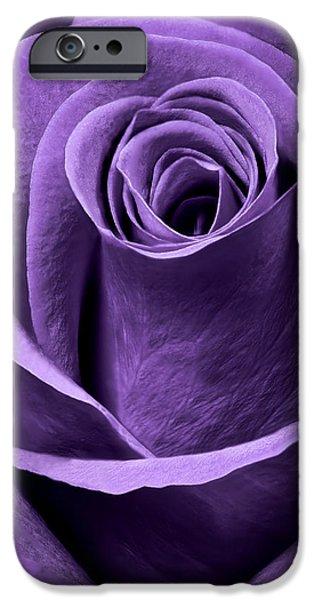 Nature Study iPhone Cases - Violet Rose iPhone Case by Adam Romanowicz