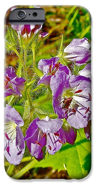 Near Natchez Trace Parkway iPhone Cases - Virginia Waterleaf near Jackson Falls along Natchez Trace Parkway-Tennessee  iPhone Case by Ruth Hager