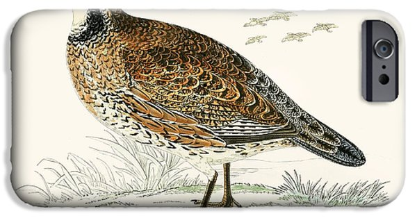 Hunting Bird iPhone Cases - Virginian Partridge iPhone Case by Beverley R. Morris