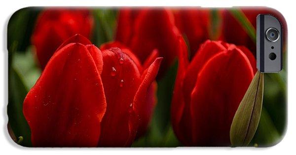 Ruby Garden Jewel iPhone Cases - Vivid Red Tulip Garden iPhone Case by Georgia Mizuleva