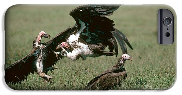 Vulture iPhone Cases - Vulture Fight iPhone Case by Gregory G. Dimijian, M.D.