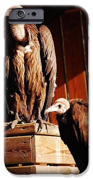 Vulture iPhone Cases - Vulture male iPhone Case by Gina Dsgn