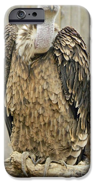 Smithsonian iPhone Cases - Vulture Portrait iPhone Case by Emmy Marie Vickers