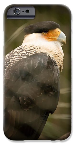 Fury iPhone Cases - Vulture with a Fury Black Hat iPhone Case by Penny Lisowski