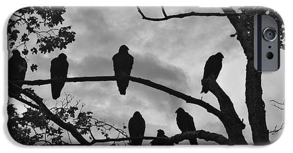 Vulture iPhone Cases - Vultures And Cloudy Sky BW iPhone Case by Dave Gordon