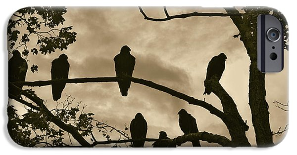 Roosting iPhone Cases - Vultures And Cloudy Sky iPhone Case by David Gordon