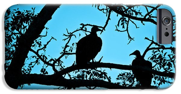 Vulture iPhone Cases - Vultures iPhone Case by Delphimages Photo Creations