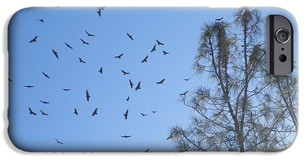 Bull Pyrography iPhone Cases - Vultures Migrating Through iPhone Case by Jim Taylor