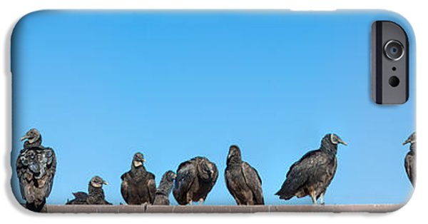 Everglades iPhone Cases - Vultures On Anhinga Trail, Everglades iPhone Case by Panoramic Images