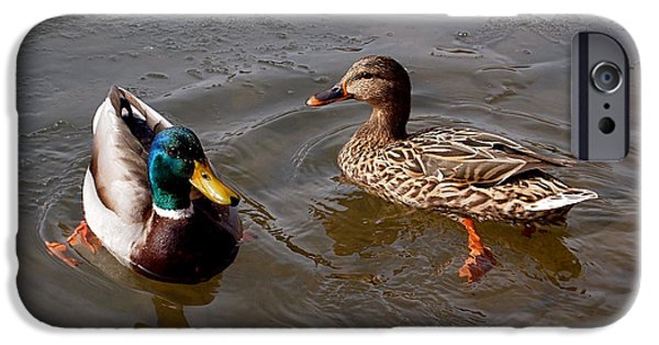 Ducks iPhone Cases - Wading Ducks iPhone Case by Rona Black