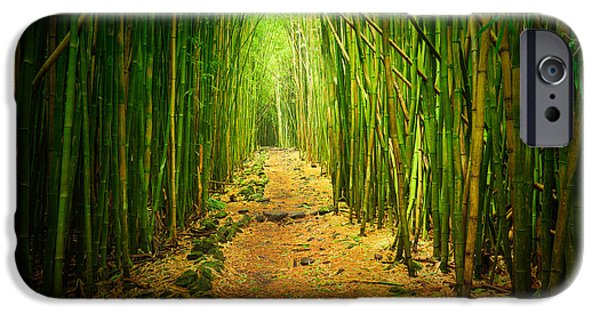 Flora Photographs iPhone Cases - Waimoku Bamboo Forest iPhone Case by Inge Johnsson