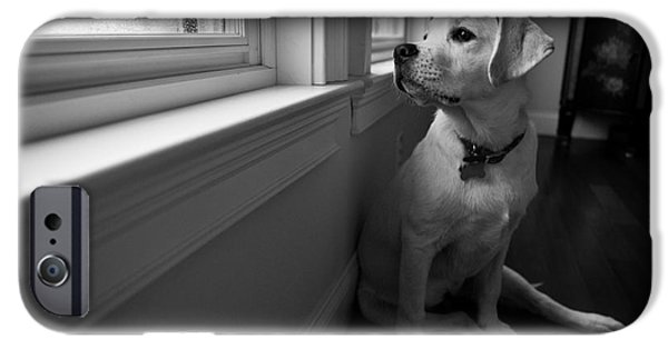 Dog Photography iPhone Cases - Waiting iPhone Case by Diane Diederich
