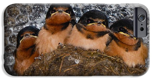 Barn Swallow iPhone Cases - Waiting for Bugs iPhone Case by Amy Porter