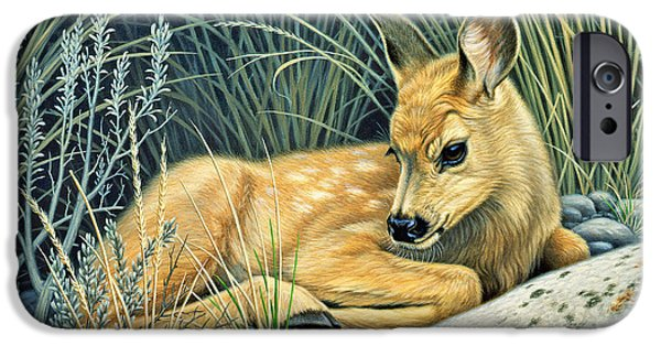 Fawn iPhone Cases - Waiting for Mom-Mule deer fawn iPhone Case by Paul Krapf