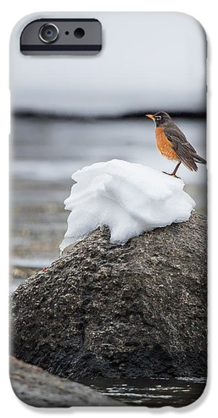 Robin iPhone Cases - Waiting For Spring iPhone Case by Bill  Wakeley