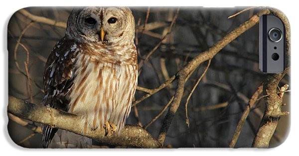 Birds iPhone Cases - Waiting for Supper iPhone Case by Lori Deiter