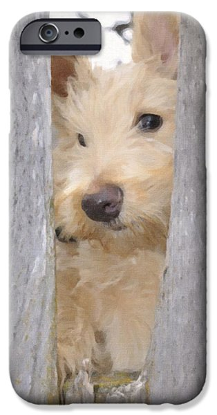 Scottish Terrier Puppy iPhone Cases - Waiting For You iPhone Case by Image Takers Photography LLC - Laura Morgan