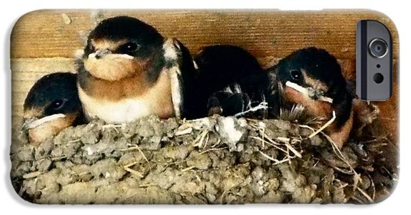 Swallow Chicks iPhone Cases - Waiting On Dinner iPhone Case by Audrey Van Tassell
