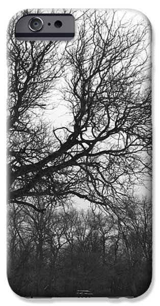 Tree Art Print iPhone Cases - Waiting on Spring iPhone Case by Kathleen Scanlan