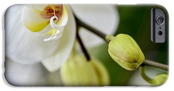 White Orchid iPhone Cases - Waiting to Bloom iPhone Case by Julie Palencia