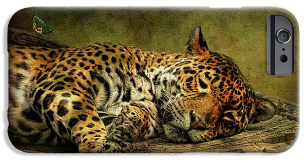 Wild Animals iPhone Cases - Wake Up Sleepyhead iPhone Case by Lois Bryan