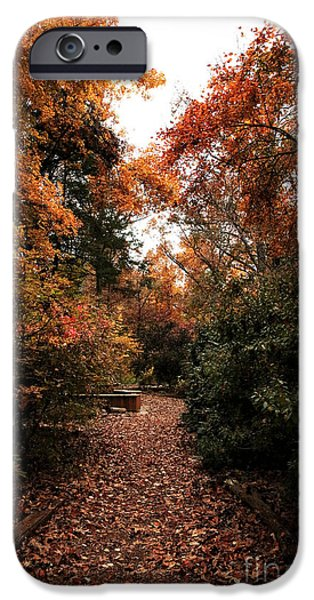 Walk Paths iPhone Cases - Walk in the Woods iPhone Case by John Rizzuto